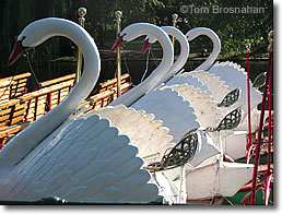 Swan Boats, Boston MA