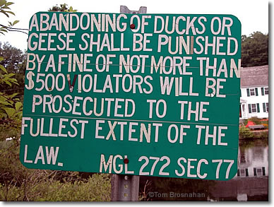 Don't Abandon Ducks or Geese in Sandwich, Cape Cod, Massachusetts