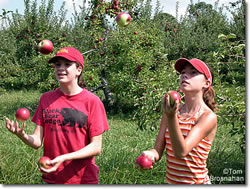 Picking--and Juggling--Apples, Bolton MA