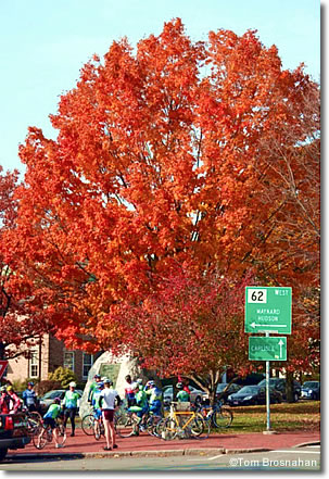 Maple tree in autumn, Monument Square, Concord, Massachusetts