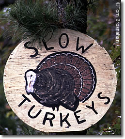 Slow Turkeys