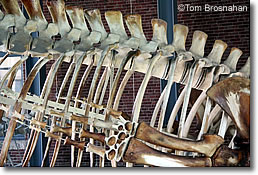 Whale Skeleton, New Bedford MA