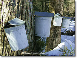 Maple Sap Buckets, Vermont
