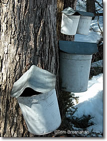 Maple sap pails, Brattleboro VT