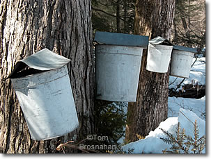 Old-fashioned maple sap pails, Brattleboro, Vermont